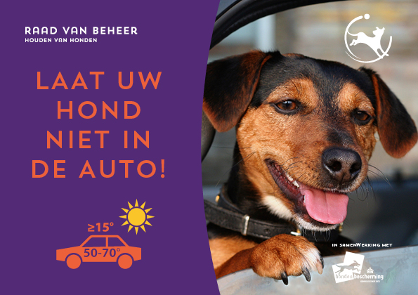 Hond In Auto Stopper A5 Liggend Ned